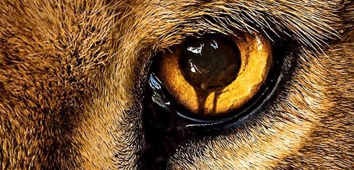 [Critique] Zoo S01E01 : un « Phénomènes » animalier.