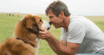 Appel au boycott de Mes vies de chien de Lasse Hallström