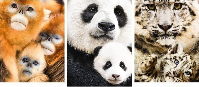 [Critique] Nés en Chine : la grandeur animale