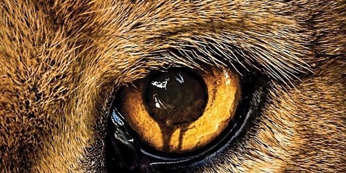 CBS annule la série Zoo après 3 saisons !