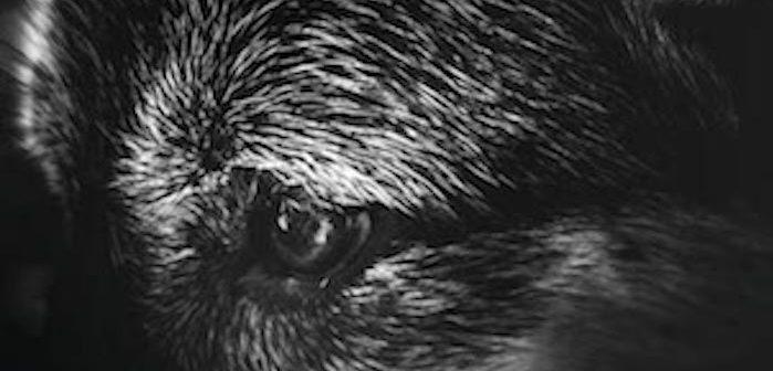 [Critique Livre] Comme un chien quand le plus humain d'une famille n'est pas celui qu'on croit 2