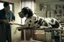 Cannes 2018 - Critique Dogman : le toiletteur et la bête