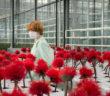Cannes 2019 - Critique Little Joe : une fleur qui vous veut du... <a href=
