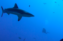 Avignon 2019 – J'irai danser avec les requins1