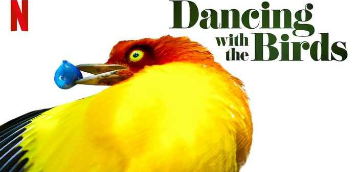 Critique La Danse des Oiseaux, le ballet merveilleux des oiseaux de paradis_1_Dancing with the birds