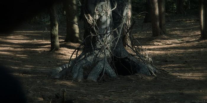 Critique The Wretched: ma sorcière mal aimée