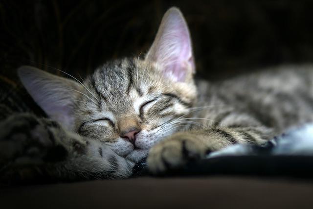 Critique La magie du sommeil2