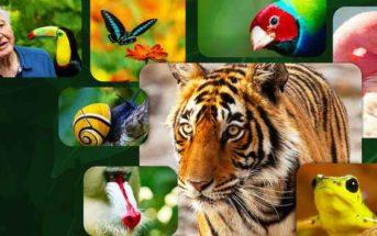 Critique La Vie en couleurs avec David Attenborough